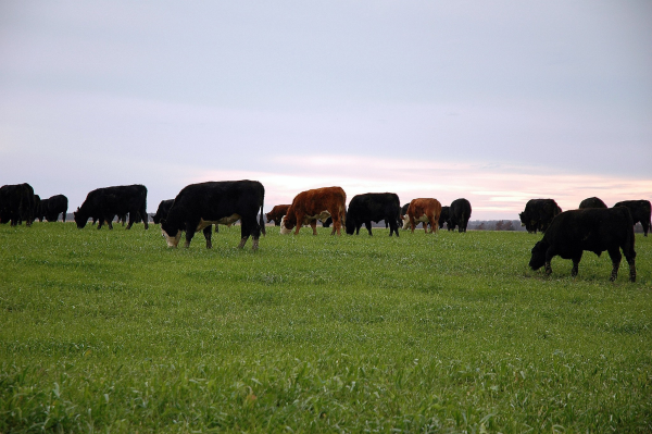 US Wellness Meats Farmers & Partners