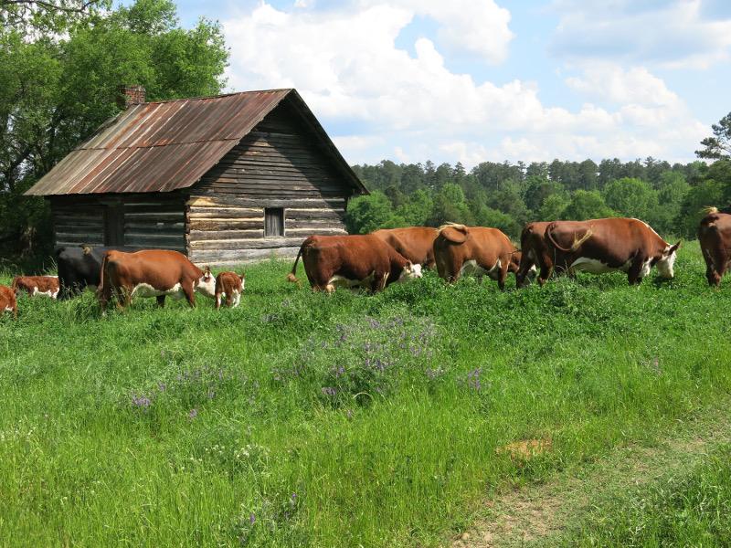 grassfed, farmer