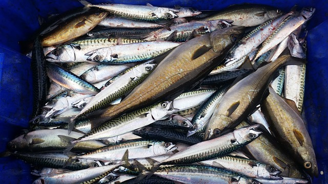 atlantic mackerel, depression, superfood