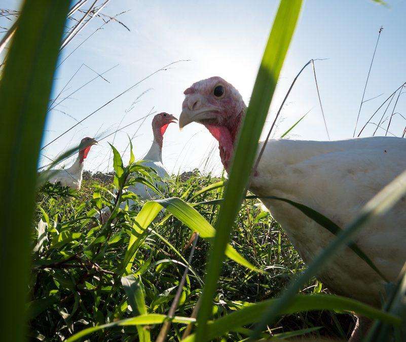US Wellness Meats Pasture Raised Turkey