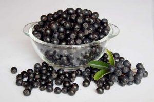 aronia berries, picnic