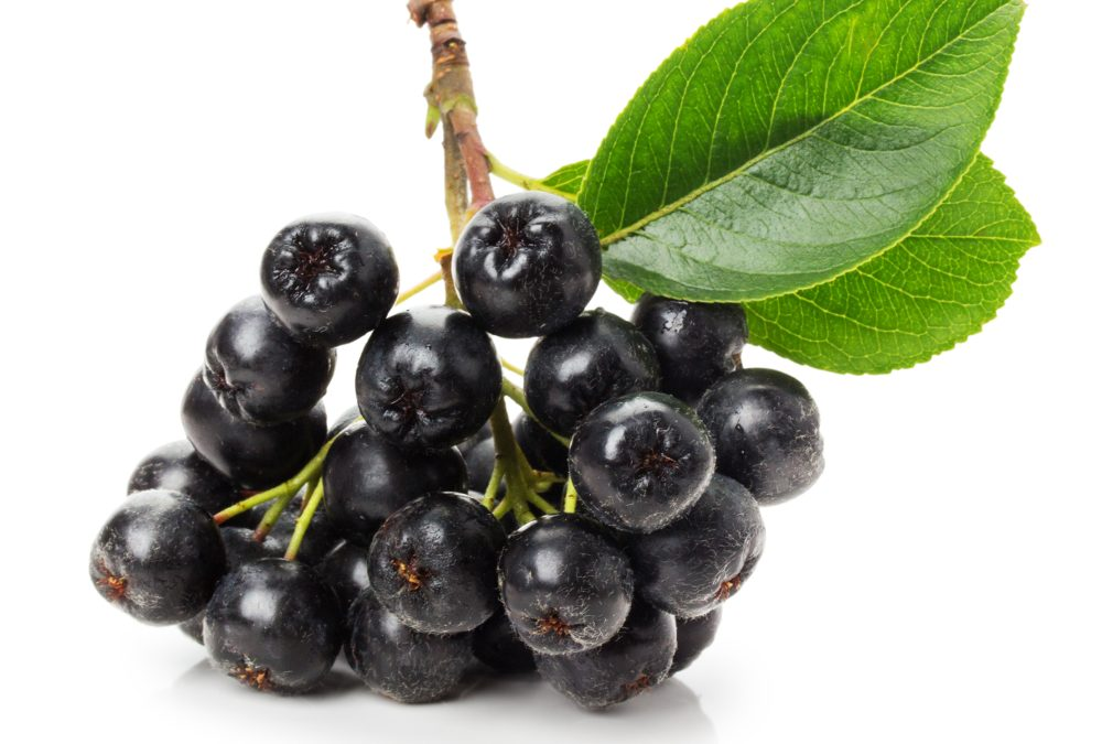 Aronia Berry Purple Power Bites