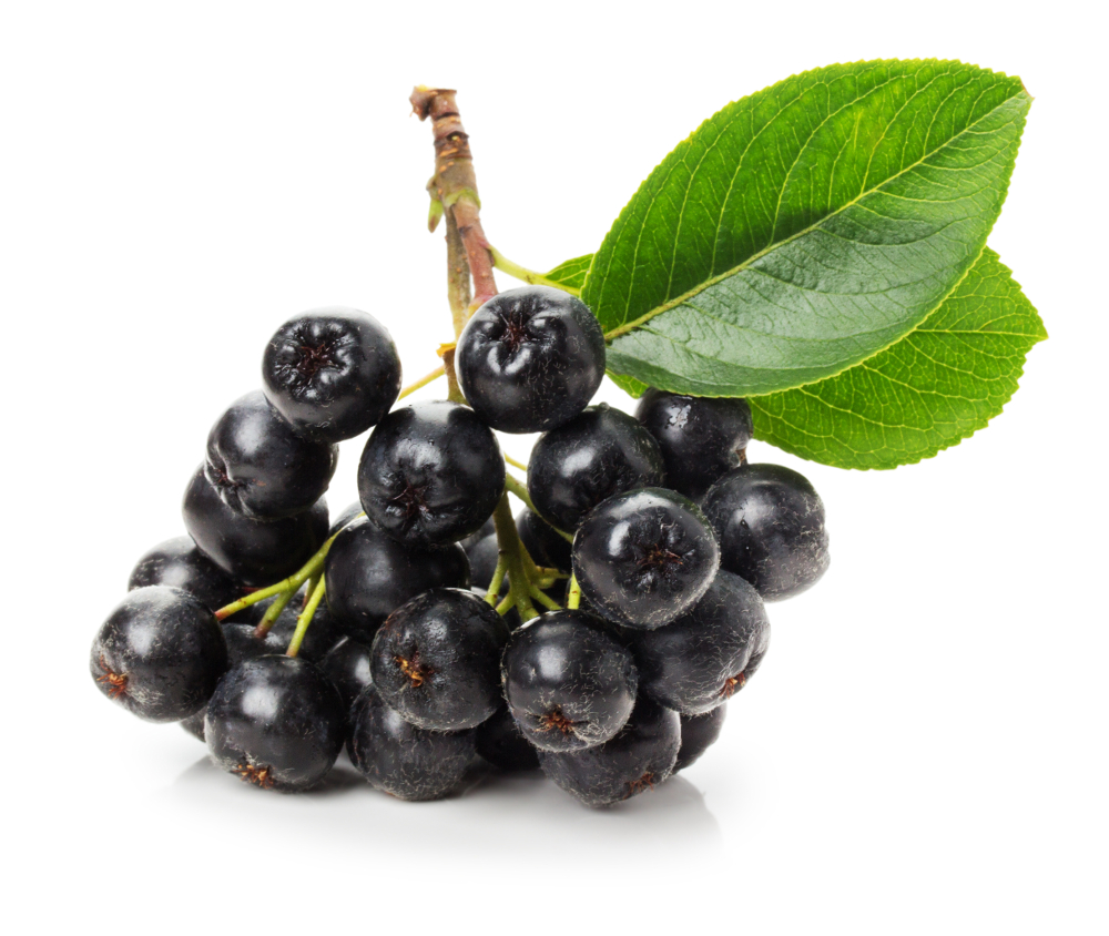 purple power bites, aronia berry