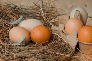 , eggs, organic, free-range