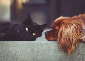 dog, cat, pet food