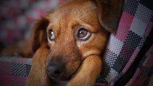 raw pet food, pet kibble, species appropriate diet, dog