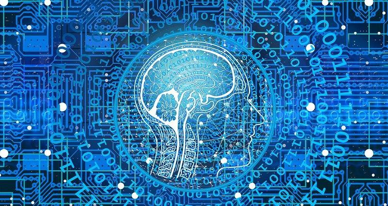 gut fungus, brain food