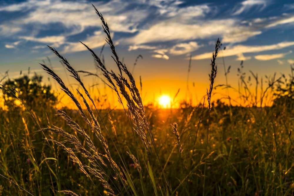 sun exposure, vitamin d, d3, gut health