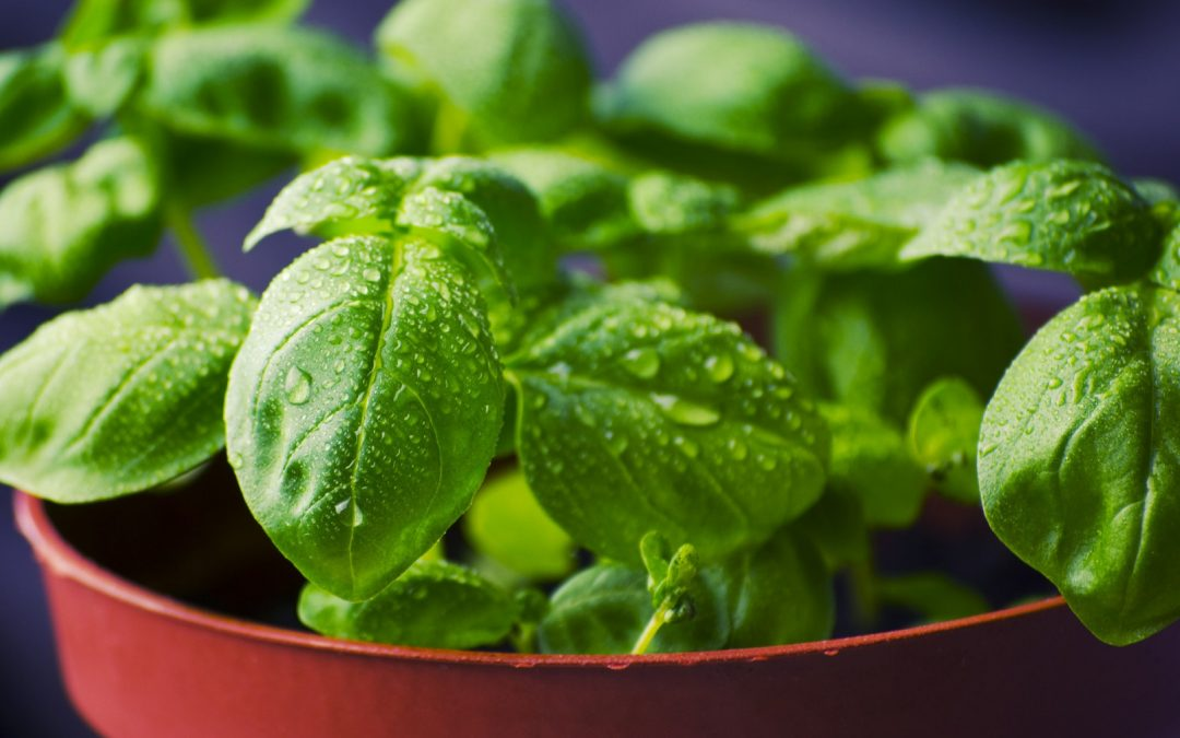7 Springtime Herbs and How to Use Them