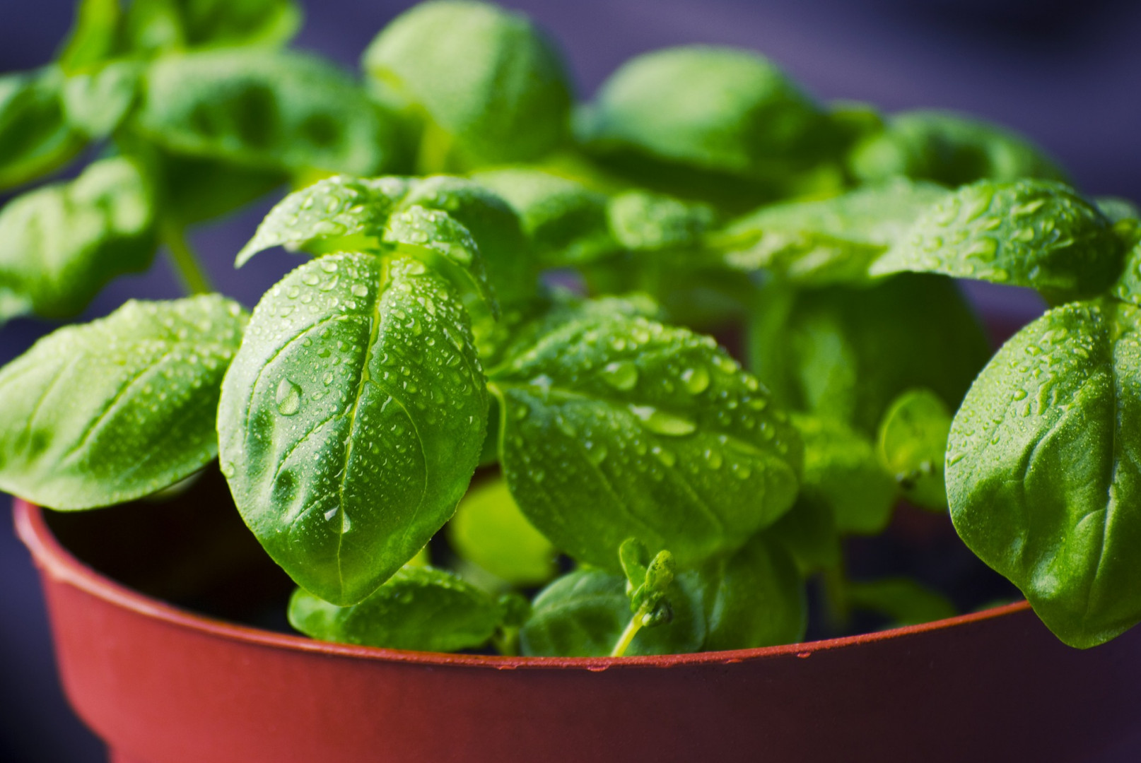 springtime herbs, basil, thyme, spring recipes, ashley martens