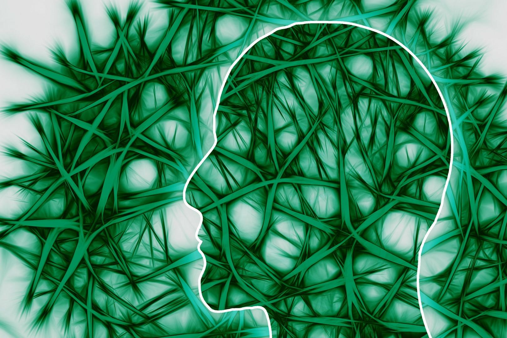 gut to brain, vagus nerve, nerve cells