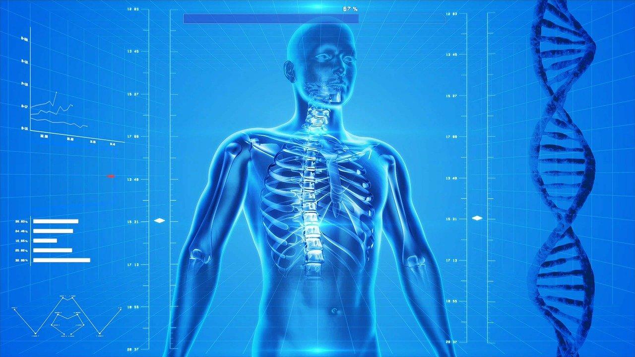 human skeleton, dna
