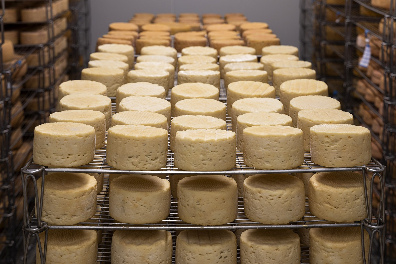 cheese, grass-fed dairy, cognitive decline
